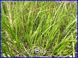 12 ea Bonide 069 16 oz Sedge Ender Nutgrass Crabgrass Goosegrass Weed Killer