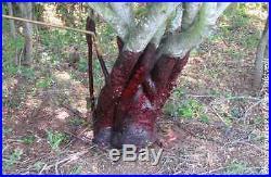 Remedy Ultra Original Herbicide Garlon 4 Brush Tree Stump Killer Case 4 Gl